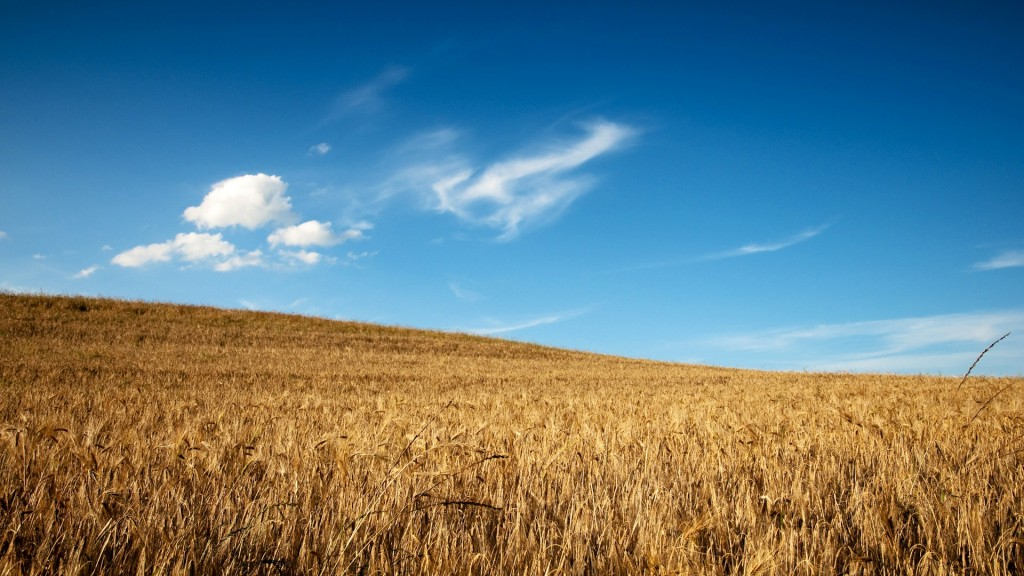wheat-field-wallpaper-24058-24720-hd-wallpapers