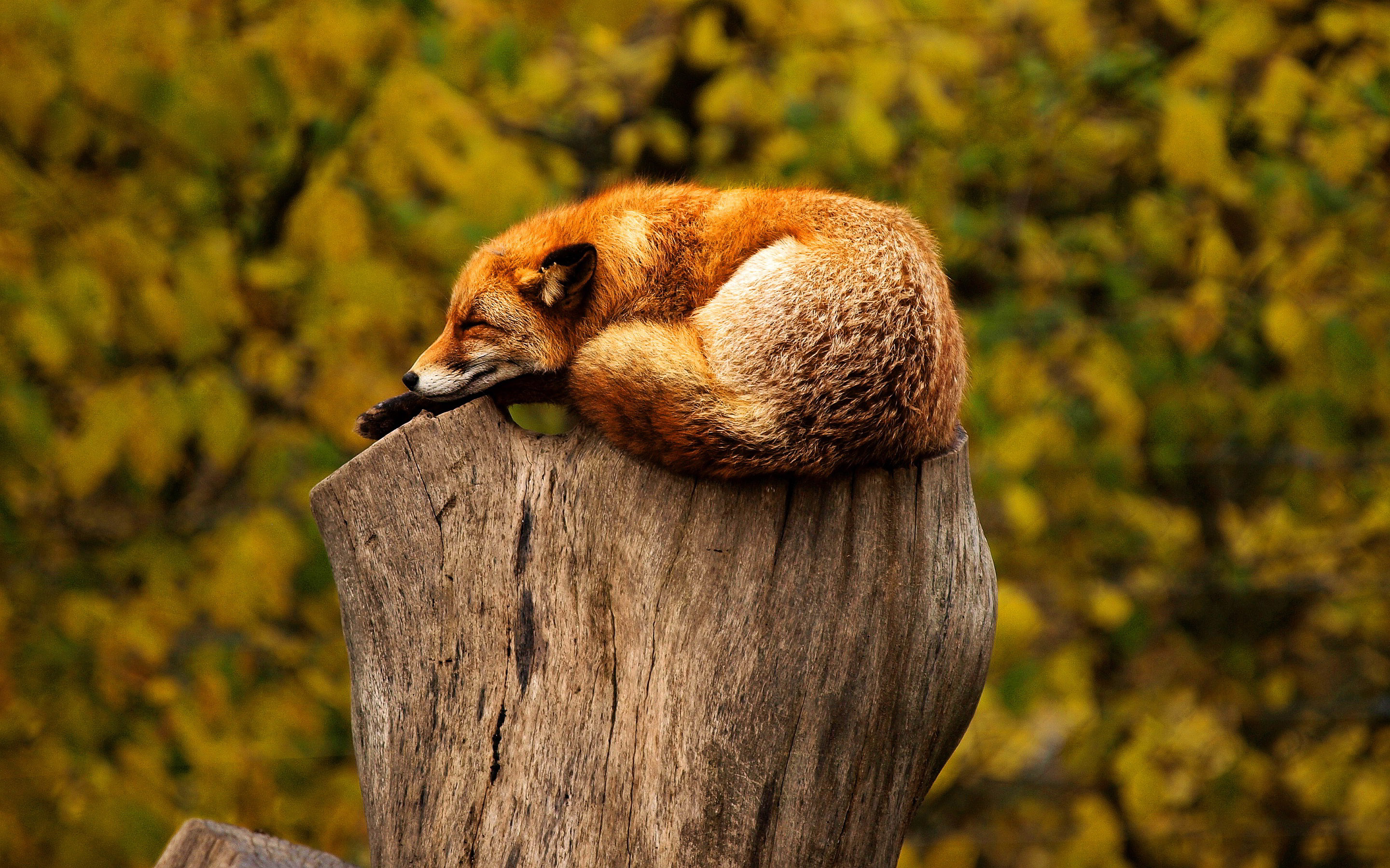 20 awesome hd animal wallpapers