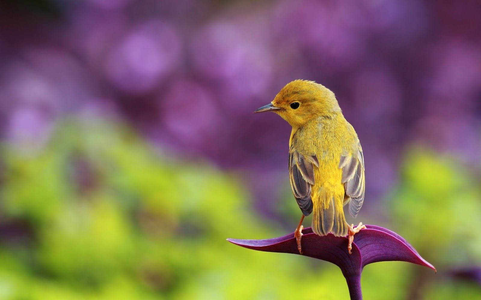 Dwnld Cute Little Bird Walpaper Free Fr Mobile: 15 Fantastic HD Bird Wallpapers