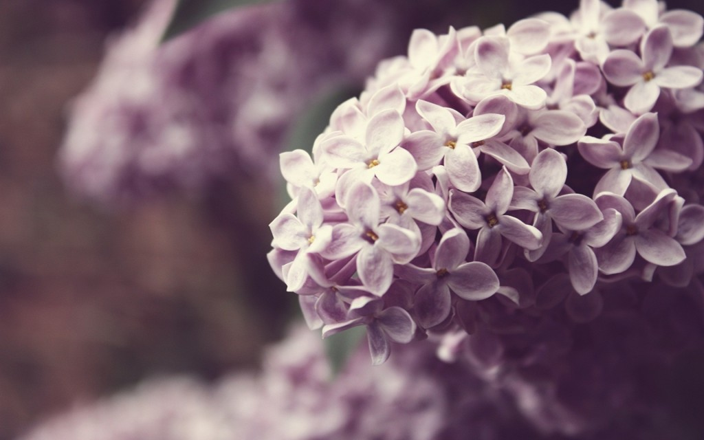 lilac-20181-20690-hd-wallpapers