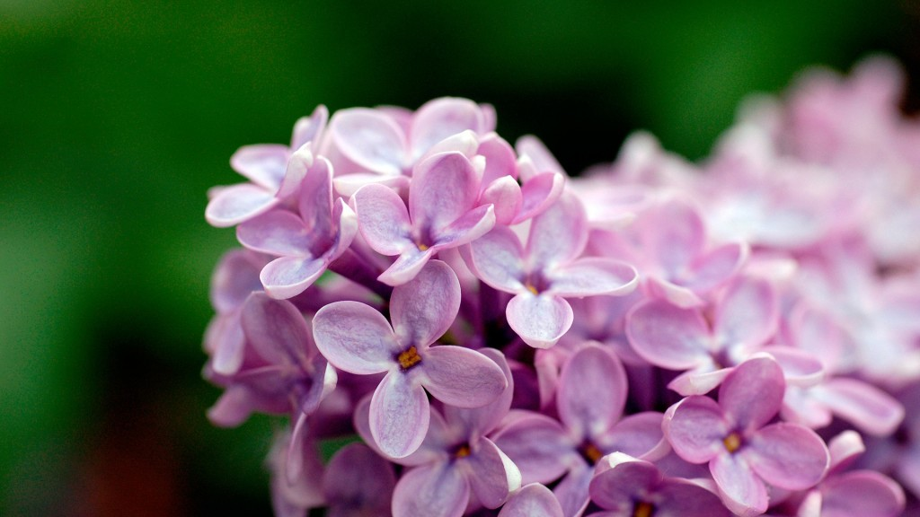 lilac-20184-20693-hd-wallpapers