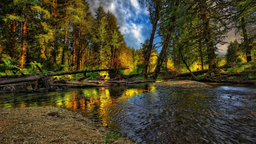 beautiful-hdr-forest-wallpaper-38920-39814-hd-wallpapers
