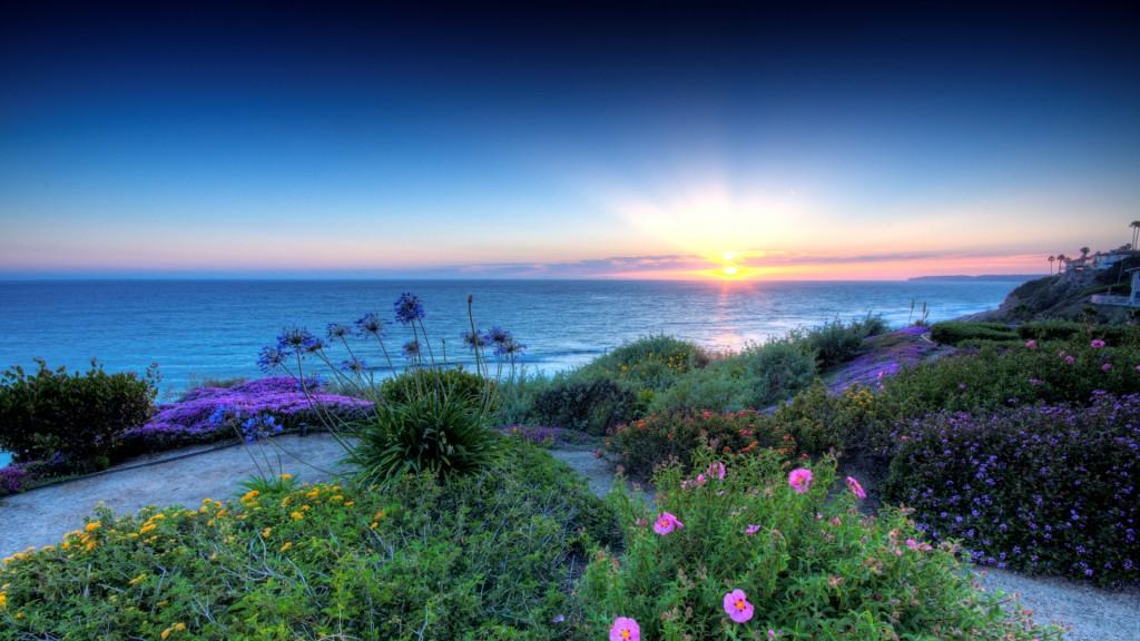 Beautiful Flowers On San Clemente California Seacoast Hdr HD Desktop Background