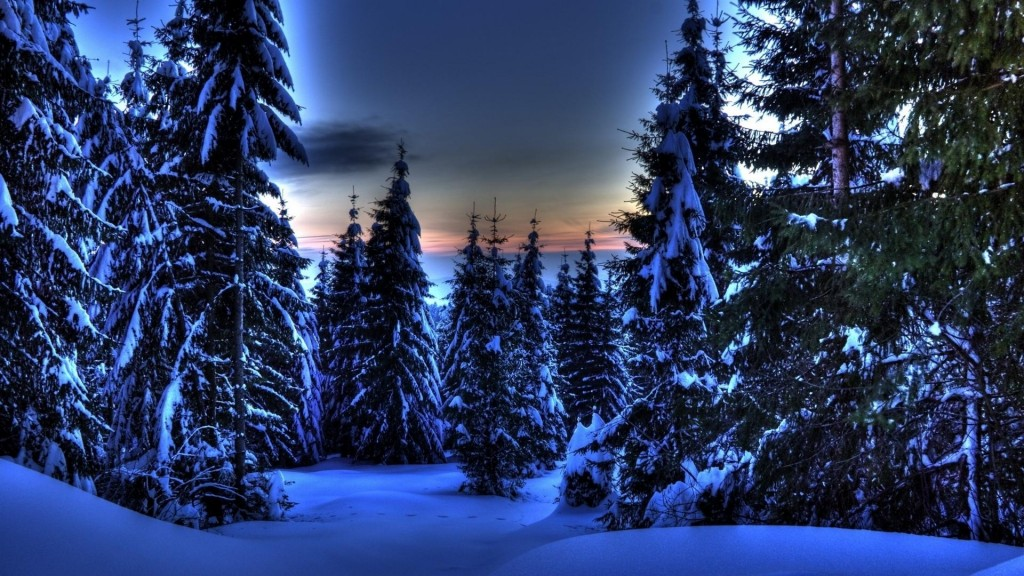 hdr-forest-wallpaper-38286-39161-hd-wallpapers