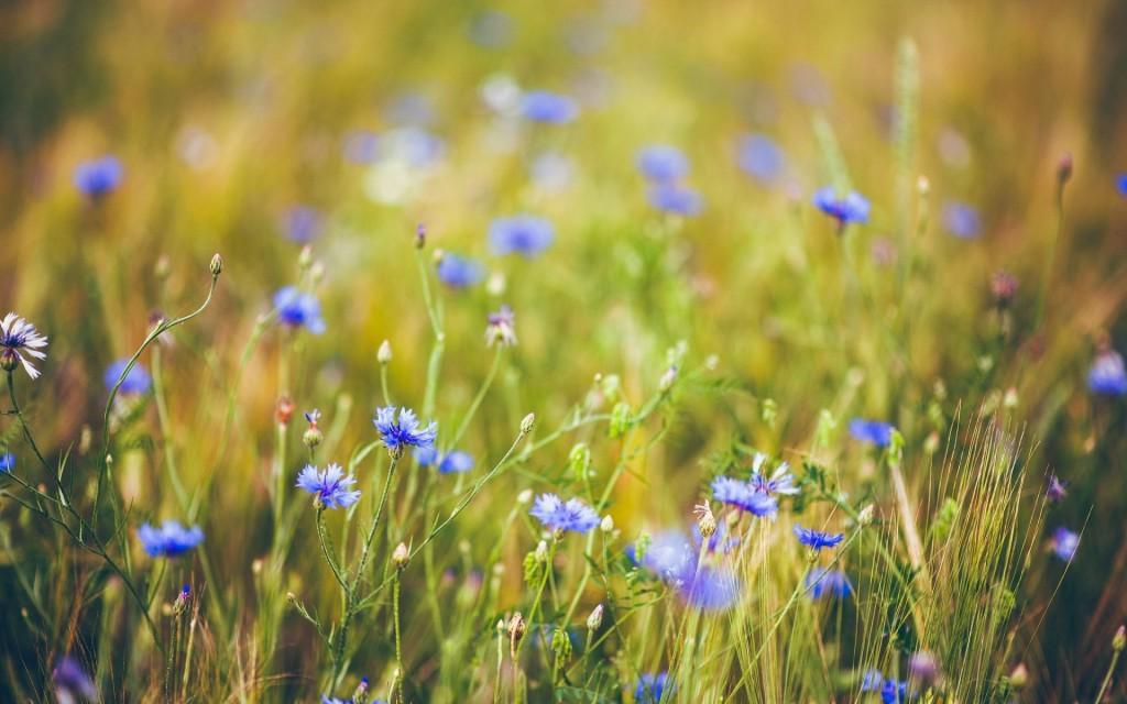 lovely-summer-mood-wallpaper-39542-40459-hd-wallpapers