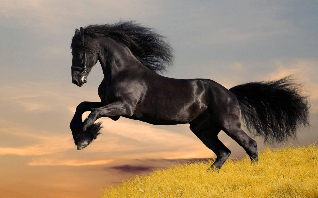 horse-wallpaper-4116-4156-hd-wallpapers