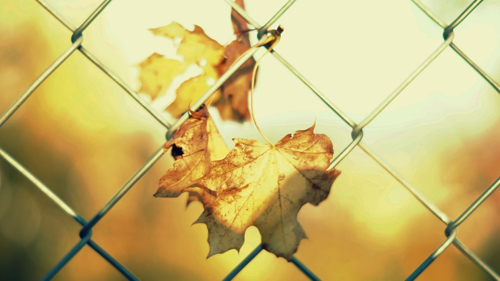 cool-fence-wallpaper-31684-32418-hd-wallpapers