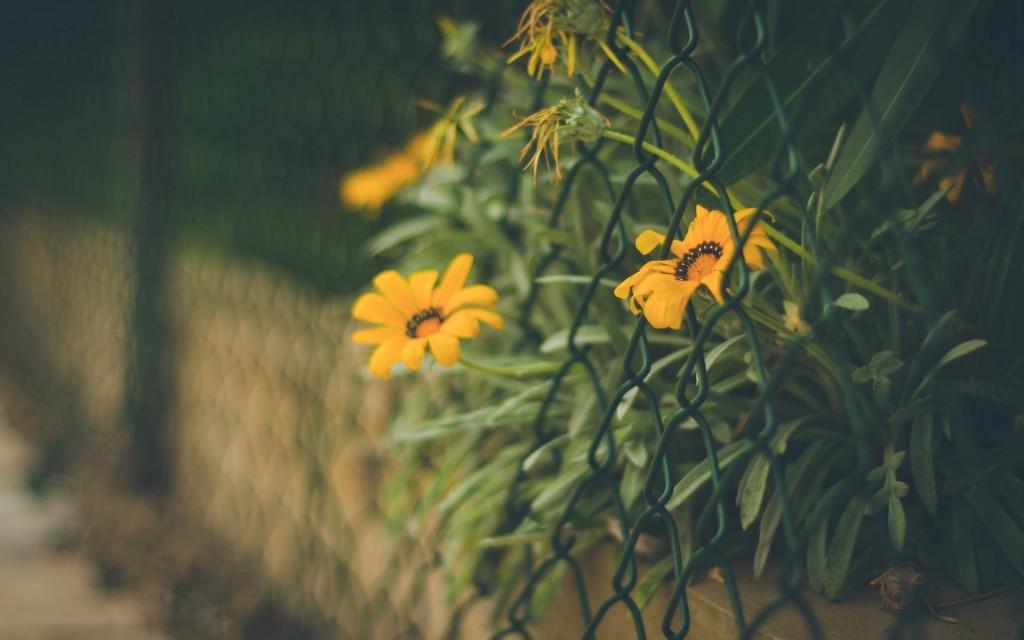 flowers-fence-wallpaper-44857-45997-hd-wallpapers