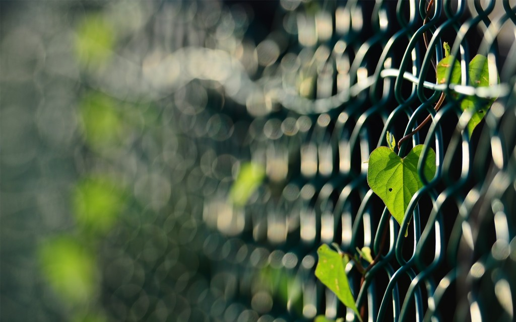lovely-fence-wallpaper-44950-46103-hd-wallpapers