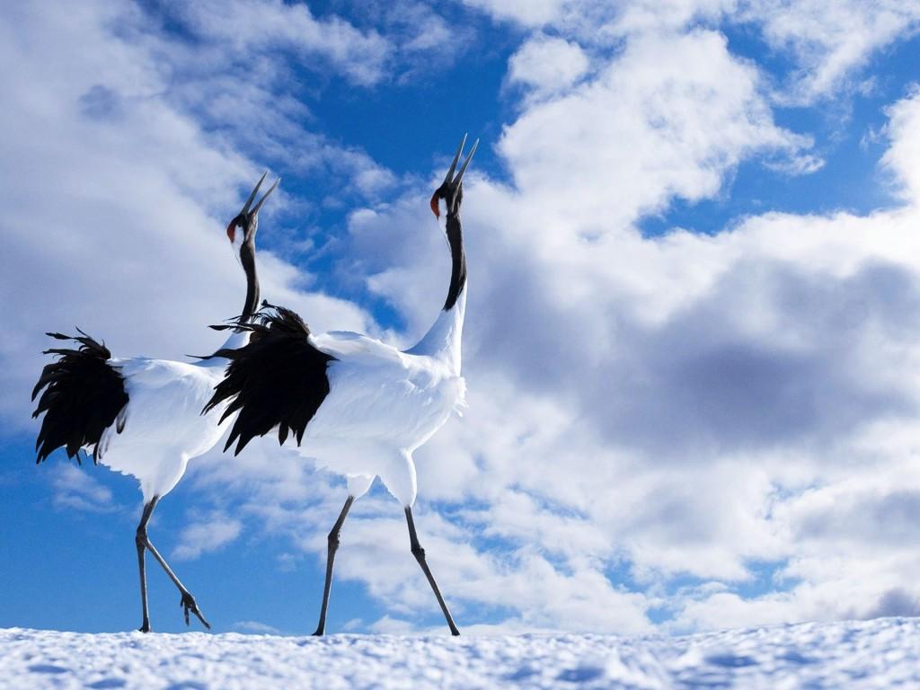 beautiful-crane-bird-wallpaper-38441-39319-hd-wallpapers