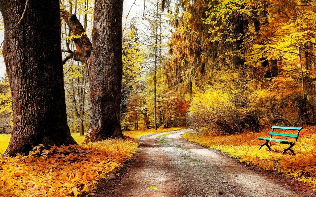 beautiful-nature-bench-wallpaper-44610-45740-hd-wallpapers