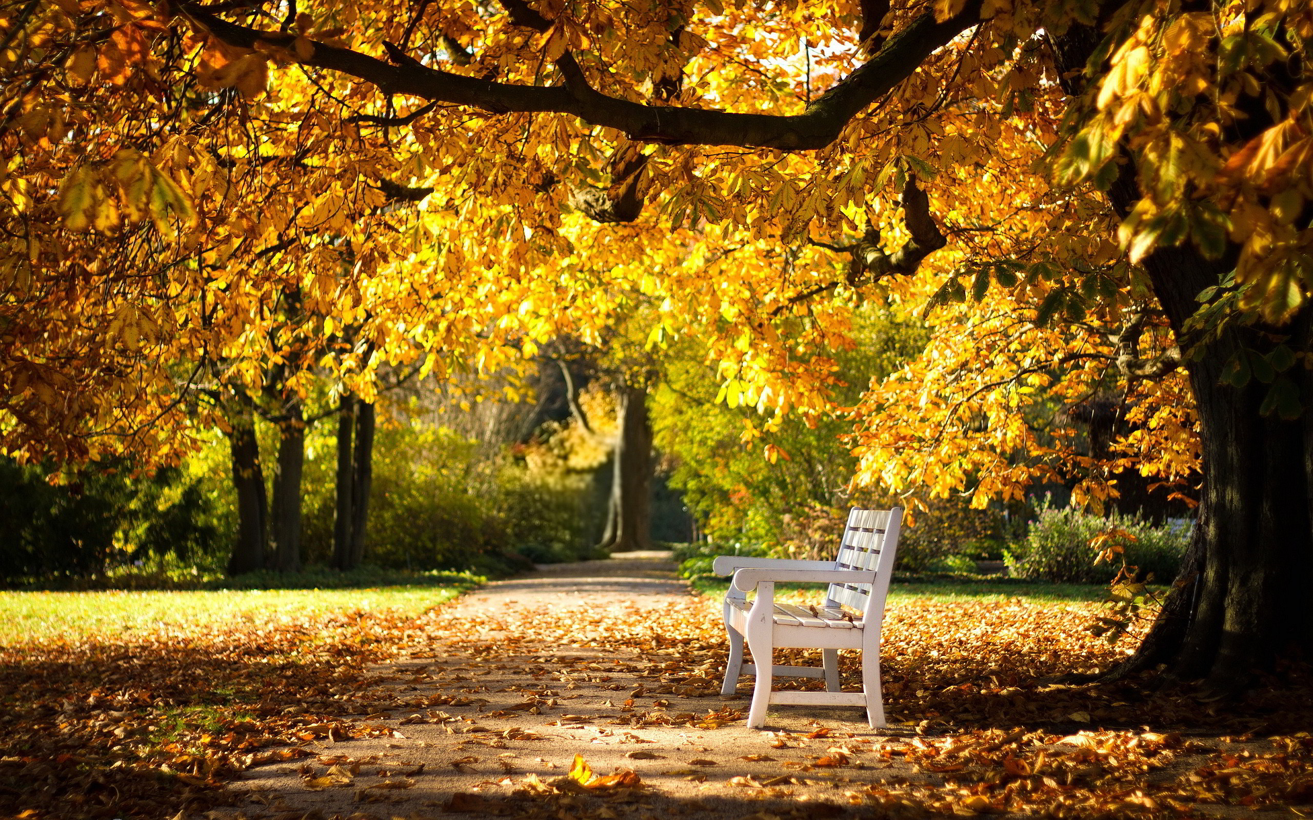 35 Excellent Hd Bench Wallpapers