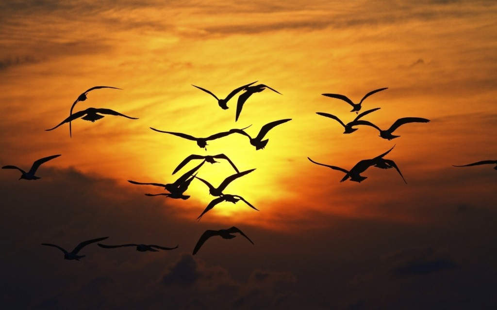 birds-silhouette-at-sunset-wallpaper-49053-50706-hd-wallpapers