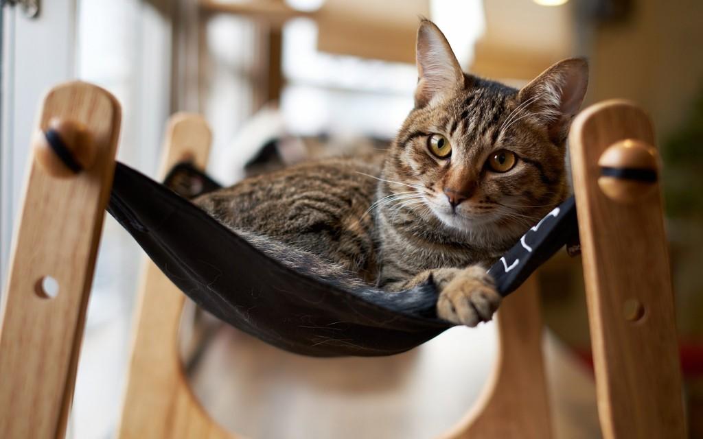 cat-hammock-wallpaper-43364-44409-hd-wallpapers