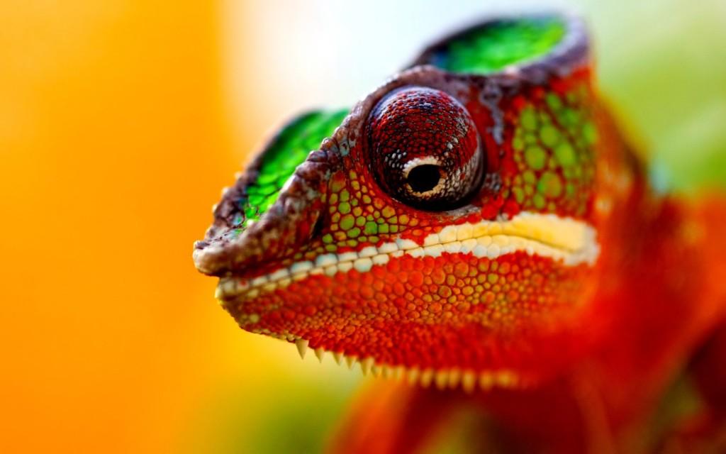 chameleon-hd-23637-24291-hd-wallpapers