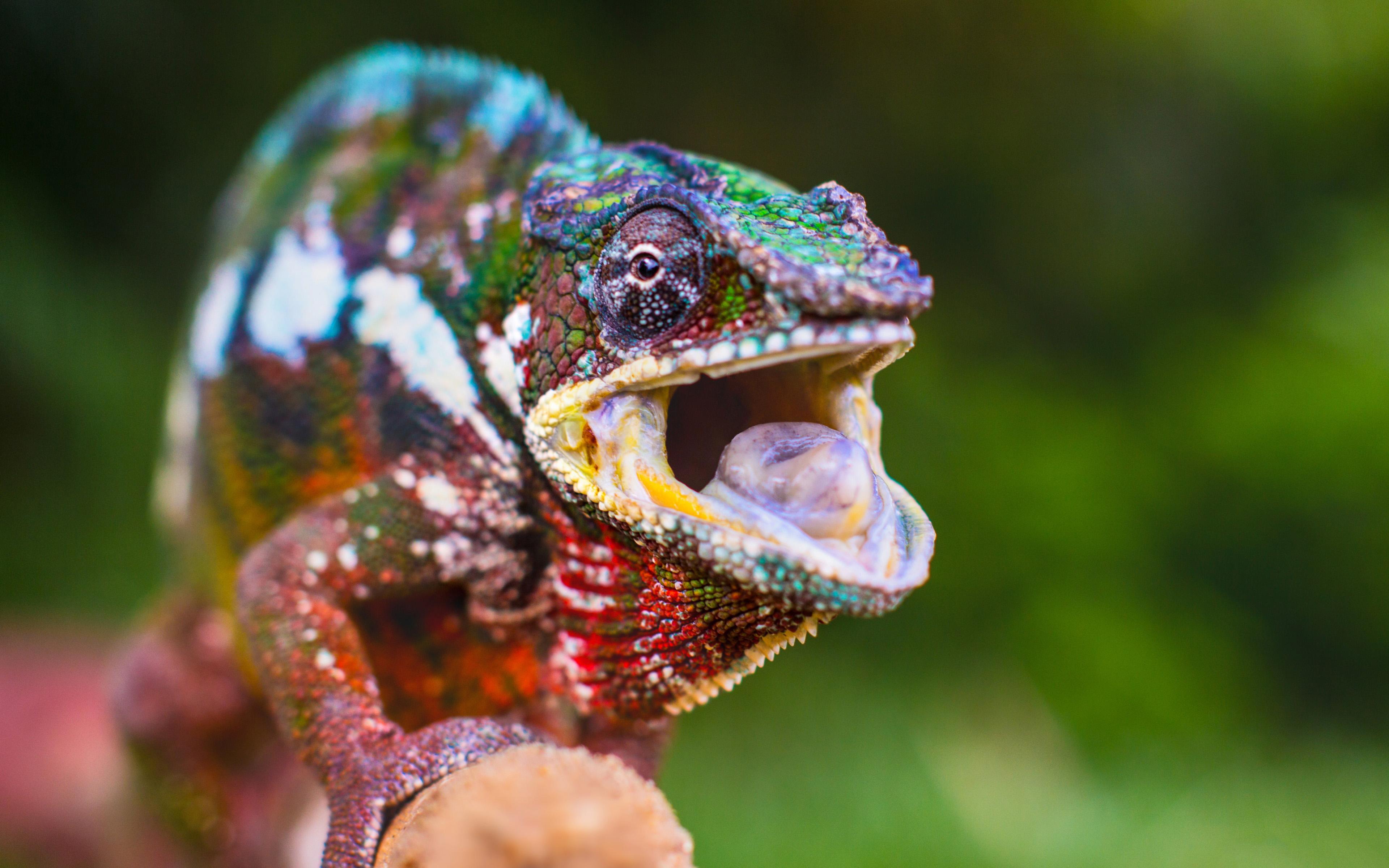 H D Reptiles 23 HD Chameleon...