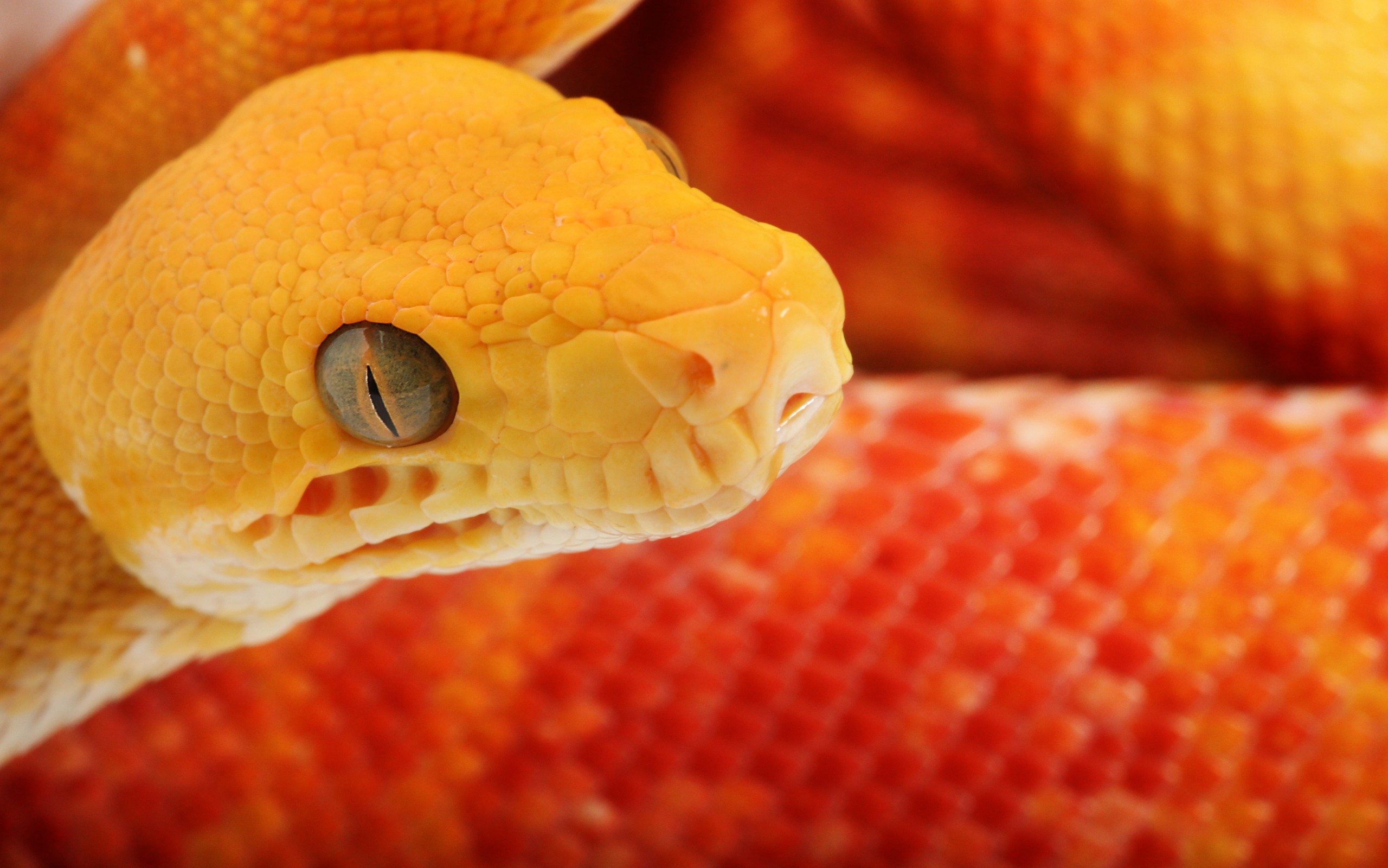 20 excellent hd snake wallpapers