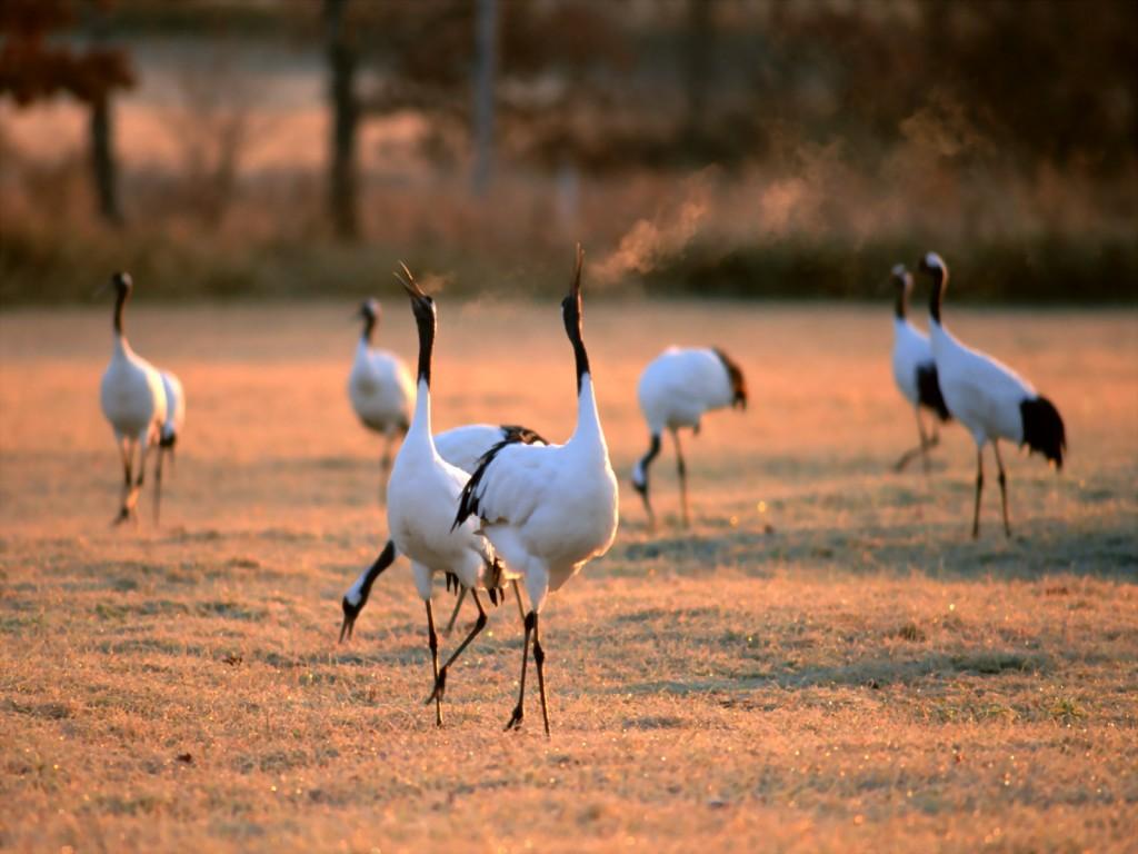 crane-bird-pictures-38439-39317-hd-wallpapers