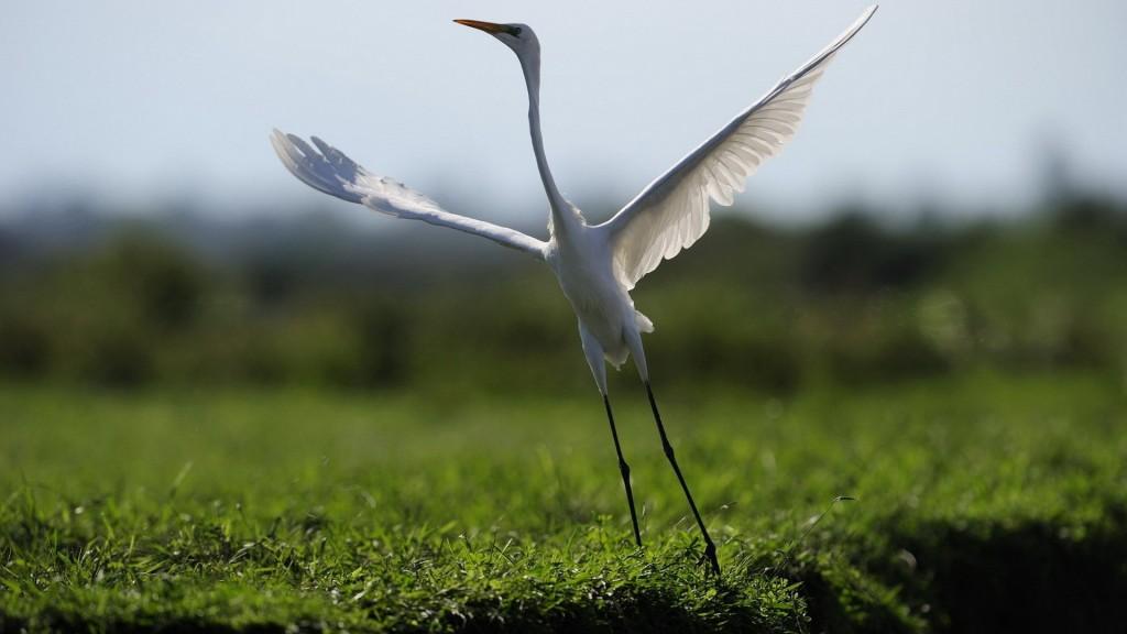 crane-bird-wallpaper-38433-39310-hd-wallpapers