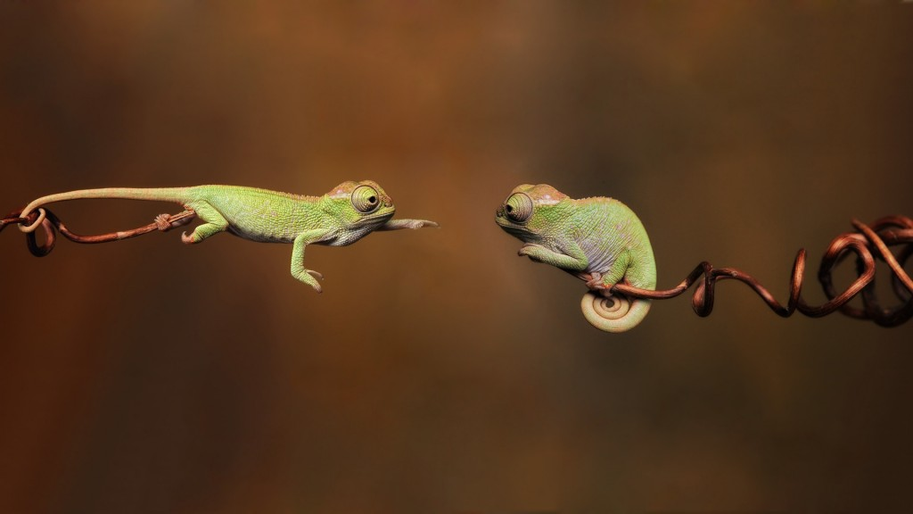 cute-chameleon-wallpaper-23640-24294-hd-wallpapers