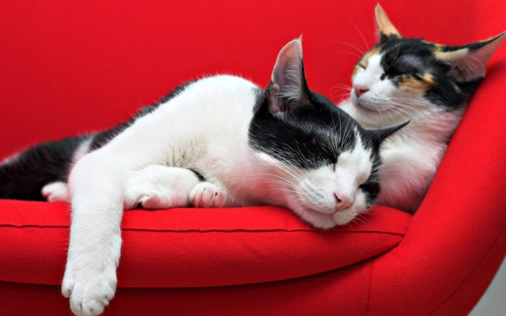 cute-sofa-wallpaper-42599-43609-hd-wallpapers
