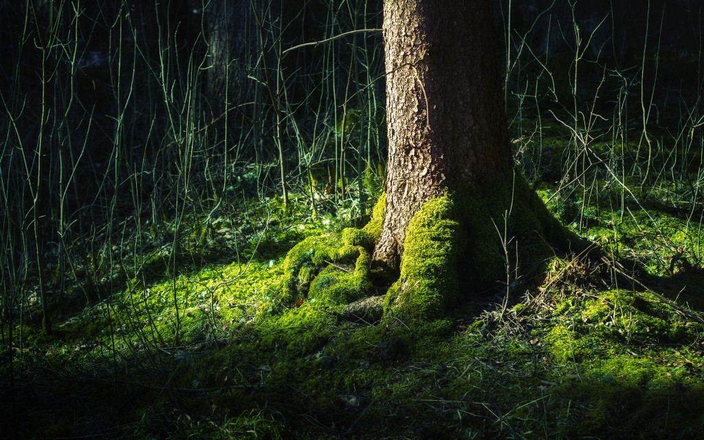 forest-wallpapers-hd-21506-22045-hd-wallpapers