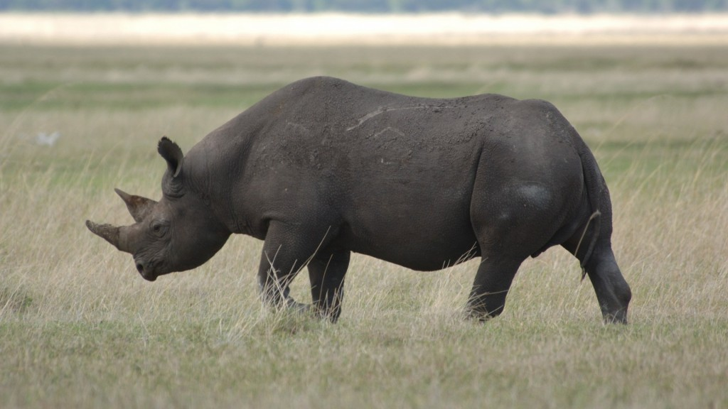 free-rhinoceros-wallpaper-43097-44125-hd-wallpapers