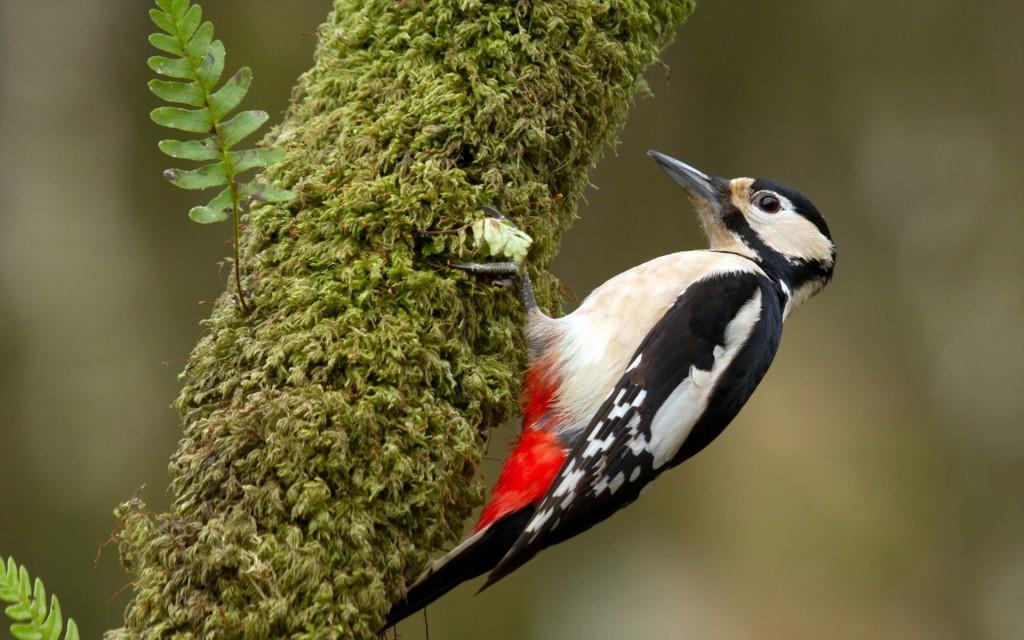 free-woodpecker-wallpaper-39725-40644-hd-wallpapers