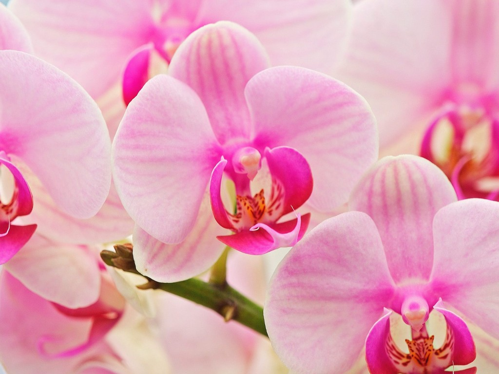 orchids-24548-25218-hd-wallpapers