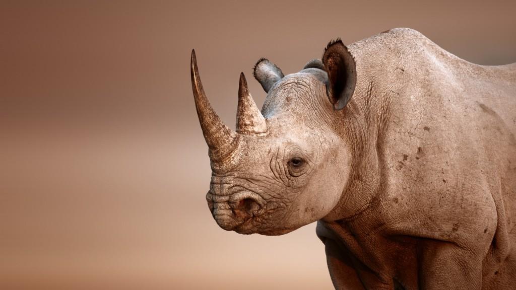 rhinoceros-desktop-wallpaper-49320-50986-hd-wallpapers