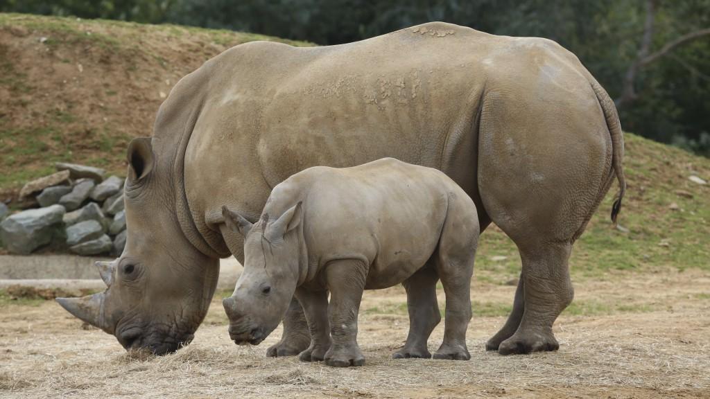 rhinoceros-family-widescreen-wallpaper-49321-50987-hd-wallpapers