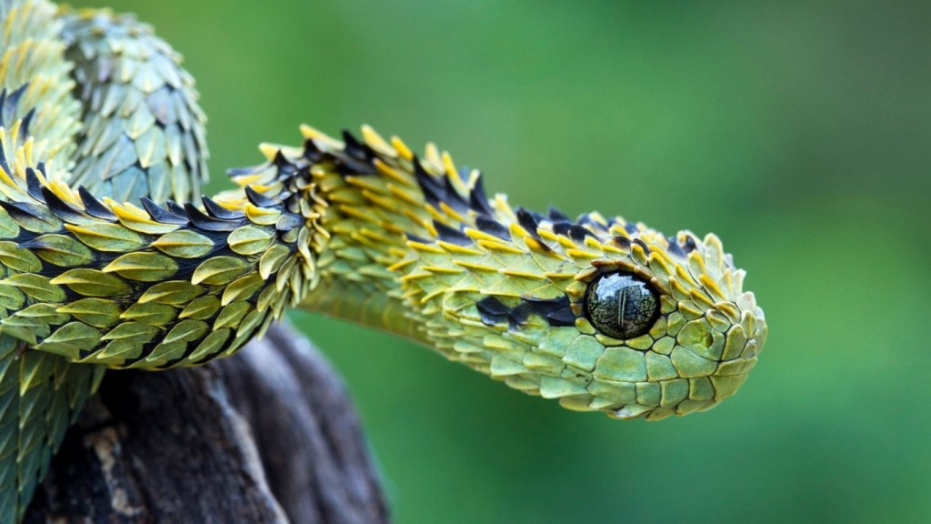 snake-pictures-29860-30579-hd-wallpapers