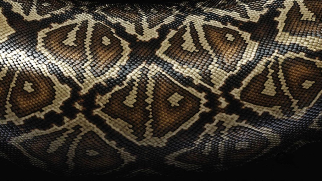 snake-skin-wallpaper-29850-30569-hd-wallpapers