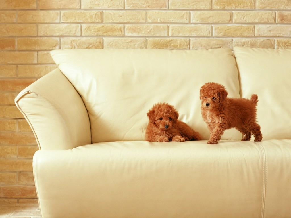 sofa-wallpaper-42607-43617-hd-wallpapers