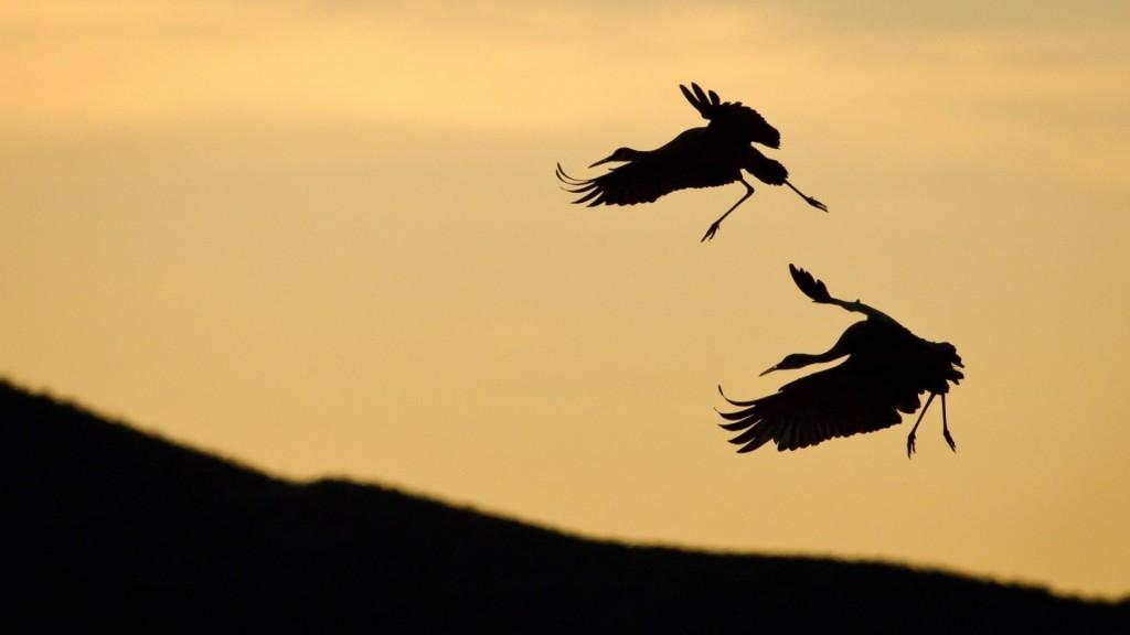 stork-bird-silhouette-wallpaper-44577-45706-hd-wallpapers