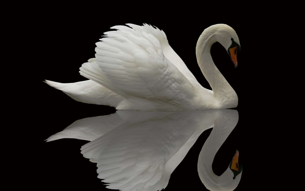 swan-28064-28786-hd-wallpapers