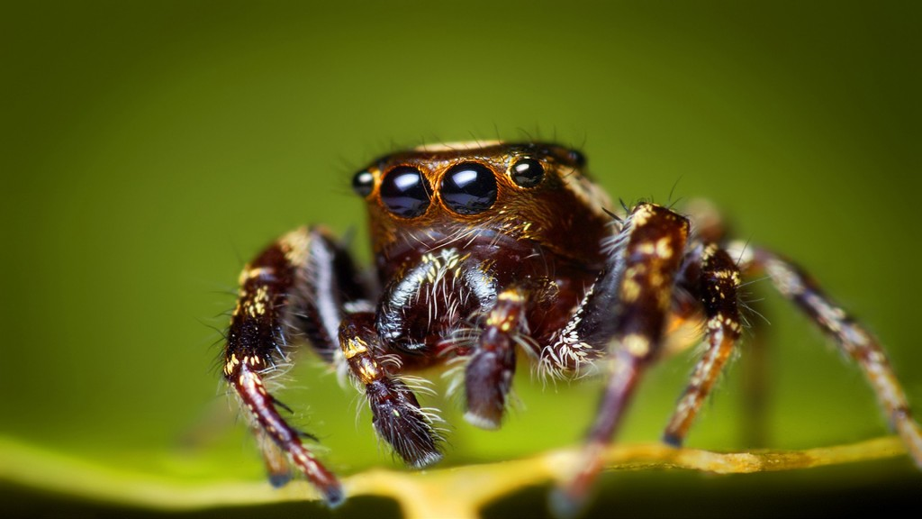 awesome-spider-wallpaper-41564-42540-hd-wallpapers