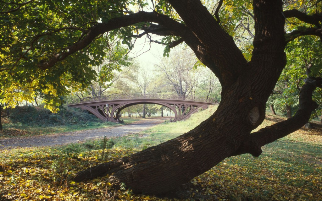 central-park-wallpaper-22016-22572-hd-wallpapers