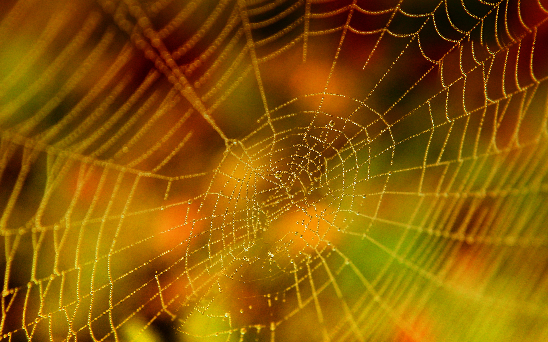 How To Make A Spider Web For Halloween