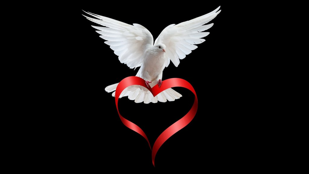 cute-dove-wallpaper-35347-36155-hd-wallpapers
