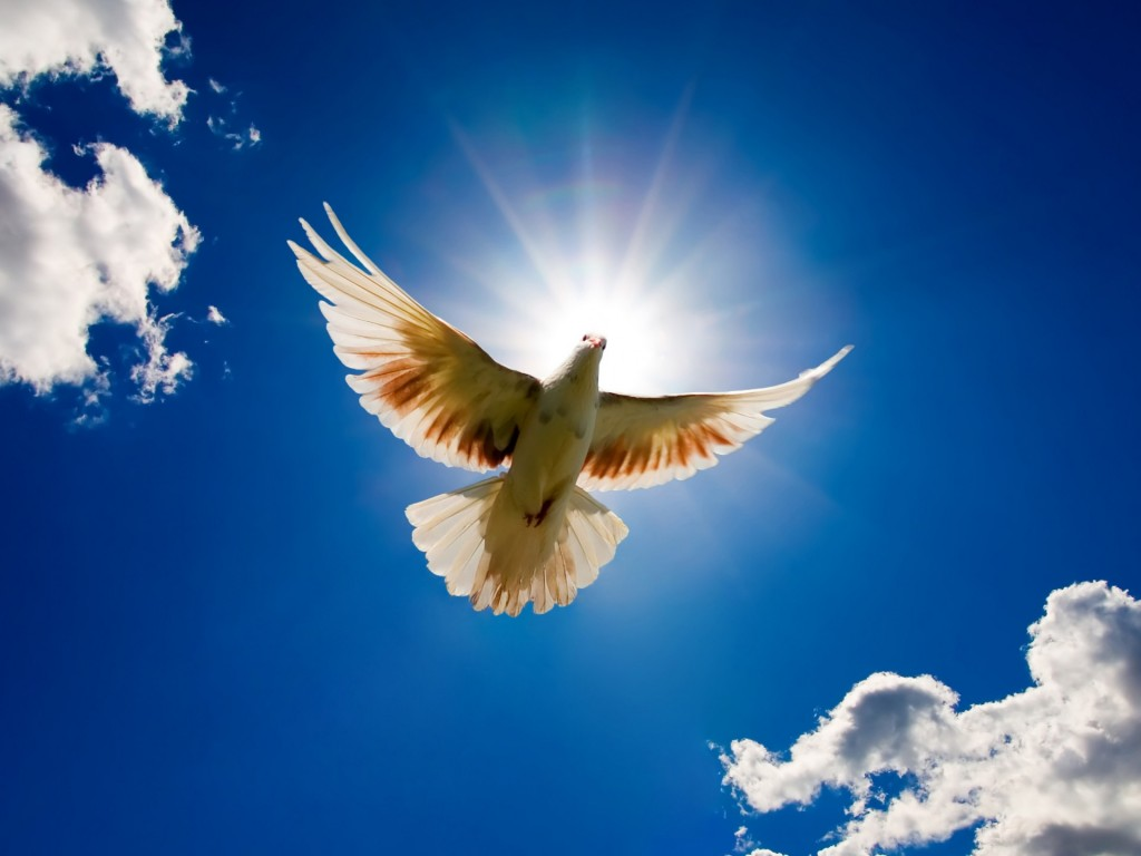 dove-hd-35345-36153-hd-wallpapers
