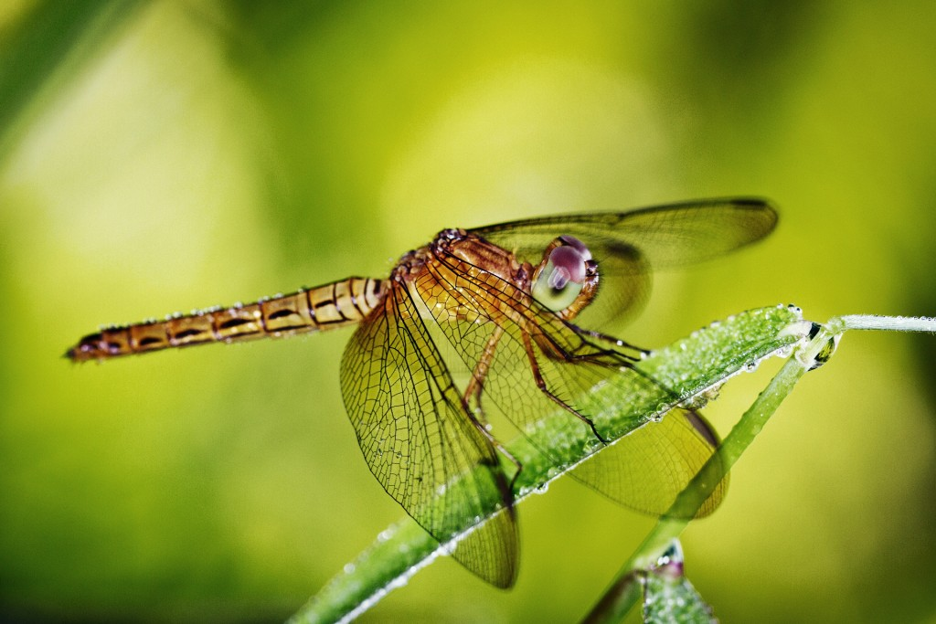 dragonfly-animal-wallpaper-49538-51213-hd-wallpapers