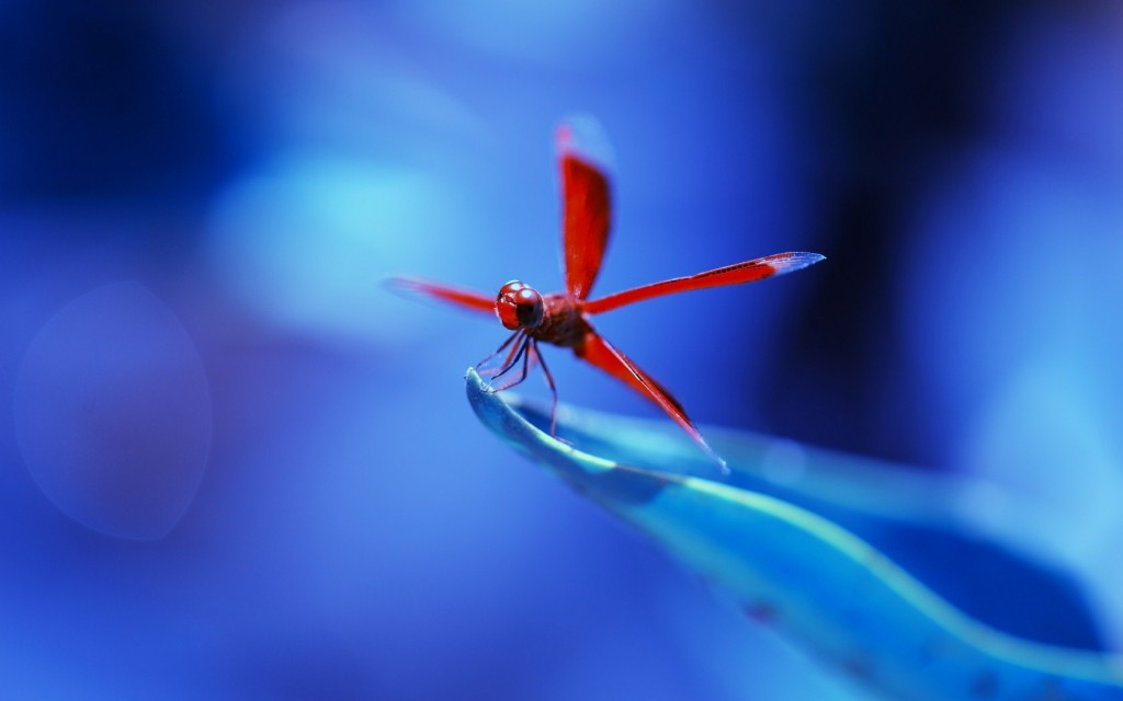 dragonfly-pictures-39225-40130-hd-wallpapers