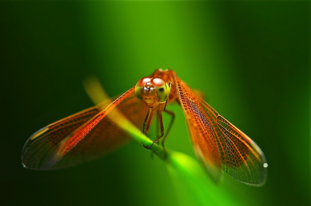 dragonfly-wallpaper-49539-51214-hd-wallpapers