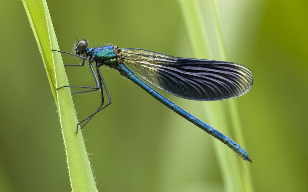 dragonfly-wallpapers-39226-40131-hd-wallpapers