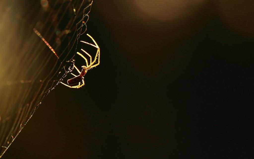 fantastic-spider-web-wallpaper-41568-42544-hd-wallpapers
