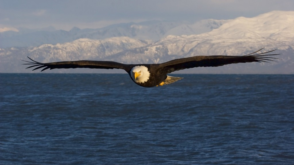 flying-eagle-wallpaper-50059-51746-hd-wallpapers