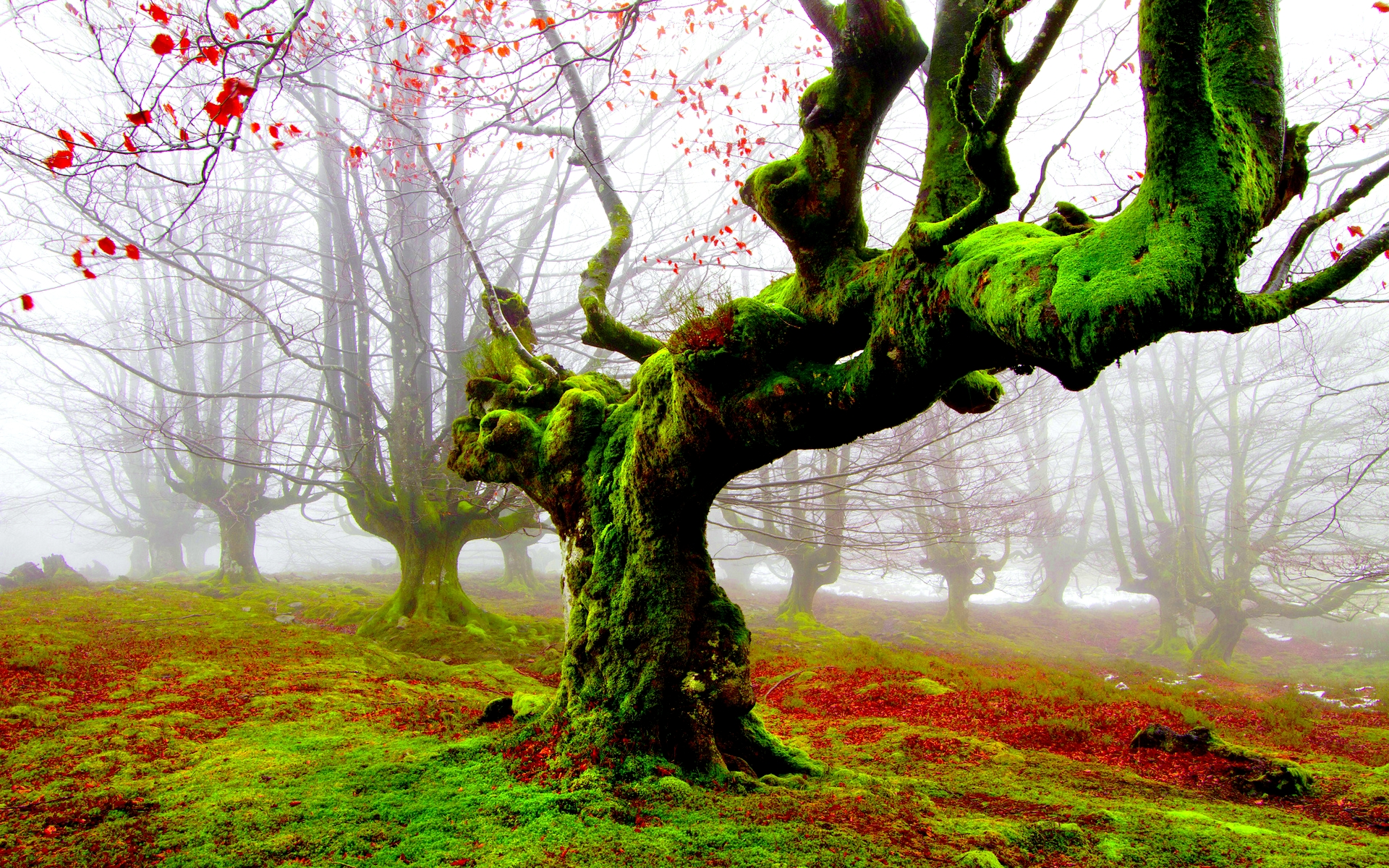 28 Lovely Hd Ice Cream Wallpapers: 28 Fantastic HD Moss Wallpapers