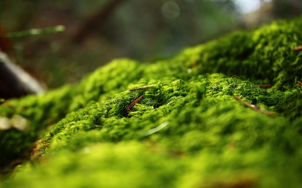 moss-background-38577-39458-hd-wallpapers