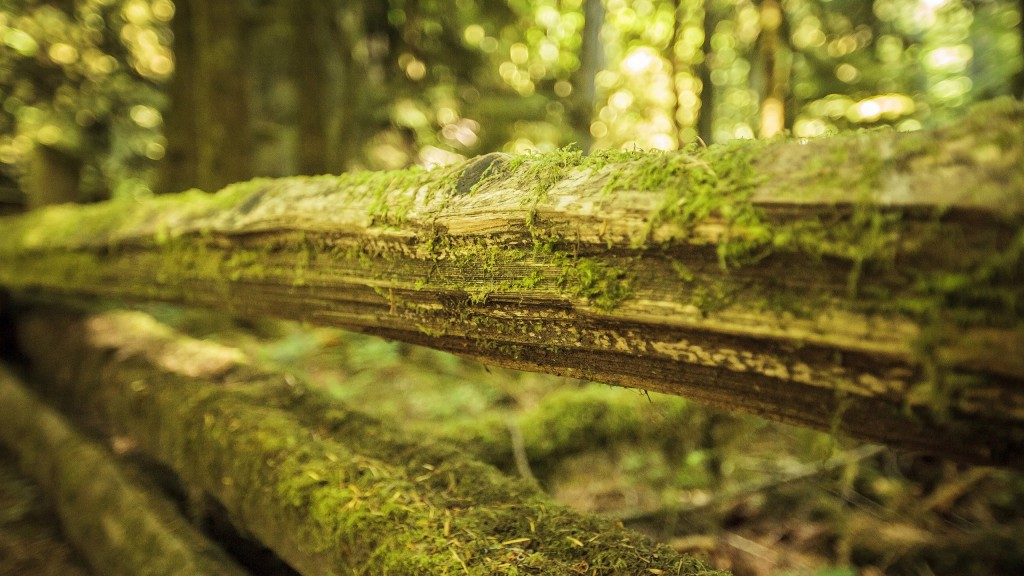 moss-on-wood-wallpaper-background-49474-51148-hd-wallpapers